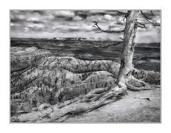 Bryce Canyon National Park, UT (Vincent Galassi) Tags: lasvegas nevada usa brycecanyonnationalpark utpentax6345d fa4585mm45mm 130s f22 iso200 landscape black white bryce canyon