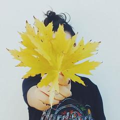 Anna (slow_brains) Tags: girls girl hemlock hibiscus nature woodrose wood rose laurel maple leaf leaves yellow blackdressed whitewall curlyhair straighthair flower flowers branch branches green autumn seasons female eyes eye greeneye brownwyes noface faceless hands hand