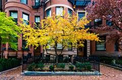 Back Bay ((Jessica)) Tags: backbay boston foliage brownstones brick massachusetts newengland tree historic wideangle a6000 rokinon sony rokinon12mm 12mm