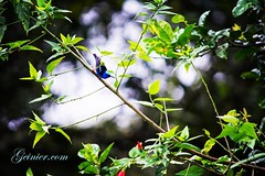 #bird #birds #birdsofinstagram -- if you love #birdwatching come on down to #costarica to #LaCusinga in the #rainforest -- #travel #vacation #photography #puravida #wellness LaCusinga.com