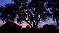 September 9th Sunset (Jim Mullhaupt) Tags: pictures camera pink blue sunset red wallpaper sky orange sun color tree weather silhouette yellow clouds landscape photography gold evening photo nikon flickr sundown florida dusk snapshot picture palm exotic p900 tropical coolpix bradenton endofday cloudsstormssunsetssunrises nikoncoolpixp900 coolpixp900 nikonp900 jimmullhaupt