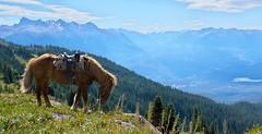 Walking at the top (Adam Wang) Tags: sky horse mountain lake snow tree grassland alp chilcotin ature bcnaturechilcotincamp