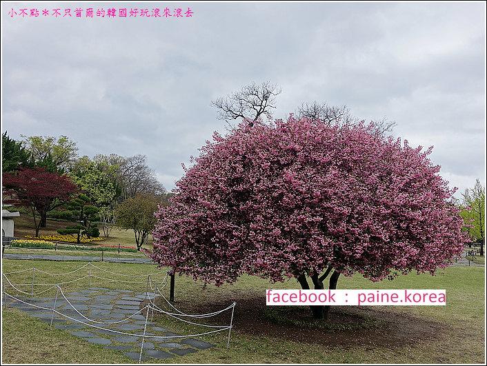 大邱達城公園 (27).JPG