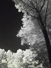 IMG_2593 (Dan Correia) Tags: belchertown infrared 15fav topv111 topv333 topv555