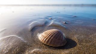IJmuiden Beach L1080798
