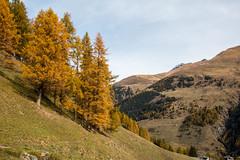 Paysage d'automne (La Tarrask) Tags: automne switzerland suisse swiss paysage arbre valais valdentremont bourgstpierre creuxdelaniord