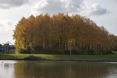 Floriade_251015_47 (Bellcaunion) Tags: park autumn fall nature zoetermeer rokkeveen florapark