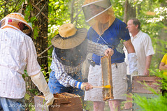 (AndiVanPhotog) Tags: family friends people nature sweet bees smoke harvest insects science honey local pollen honeycomb localhoney bottled harvesting honeybees familyowned douglasvillega tyndallhoneyharvest2015 psbeefarm