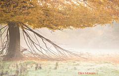 Hatfield_Forest-46 (Eldorino) Tags: park uk morning autumn trees nature forest sunrise landscape countryside nikon britain centre jour hatfield bishops stortford essex hertfordshire stanstead hatfieldforest