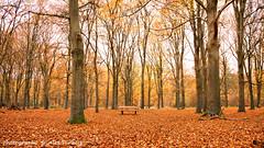 Resting place ... (Alex Verweij) Tags: autumn trees tree canon de bomen doorn kaapsebossen wandelen herfst bank boom resting rusten verweij alexverweij hoogtepuntem