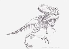 Skeleton โครงกระดูก_พชร ผลรุสะ