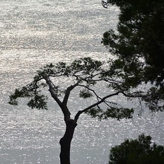 Pine tree shape (Andyfloe) Tags: ocean tree baum mittelmeer