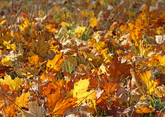 Autumn Meadow (dtroi17) Tags: autumn leaves colours herbst meadow wiese bltter farben