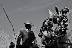 Pride (Kissingers) Tags: light shadow horse animals contrast spain andalucia espana trust jerez confidence reliance confianza feriadelcaballo lanzaprimerotucoraznytucaballosaltarelobstculo