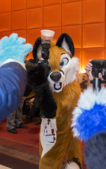 DSC_9493 (Acrufox) Tags: chicago illinois furry midwest december ohare rosemont convention hyatt regency 2014 fursuit furfest fursuiting acrufox mff2014