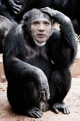 Stefan Löfven (askyog) Tags: sweden stefan sverige pm primeminister superpower quisling löfven svetsaren stefanlöfven tokskalle humanitariansuperpower