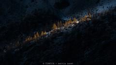 il taglio (TIMPICE) Tags: cut taglio natur nikon mountain tree d90