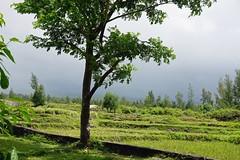 2015 04 22 Vac Phils g Legaspi - Cagsawa Ruins-58 (pierre-marius M) Tags: g vac legaspi phils cagsawa cagsawaruins 20150422