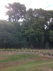 Taumanu Reserve (formerly Orpheus Reserve) (SandyEm) Tags: onehunga onehungaforeshoreproject taumanureserve 19december2015