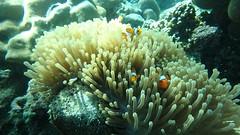 (Trip Similan island)ทริป หมู่เกาะสิมิลัน