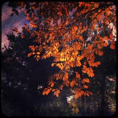 Mystic Autumn (Creepella Gruesome) Tags: iphone6splus hipstamatic nature autumn fall trees leaves foliage colors squareformat