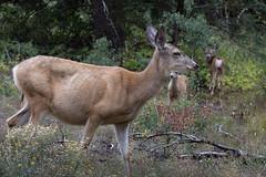 Grand Teton National Park (gunigantip) Tags: gtnp grandtetonnationalpark grandtetons tetons nationalpark