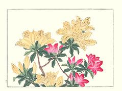Chinese azalea and azalea (Japanese Flower and Bird Art) Tags: flower chinese azalea rhododendron molle ericaceae hoitsu sakai kiitsu suzuki kimei nakano nihonga woodblock picture book japan japanese art readercollection