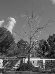 Ein alter Baum (Foto-Unlimited) Tags: balearen baum europa la ponderosa lost place mallorca spanien fotounlimited