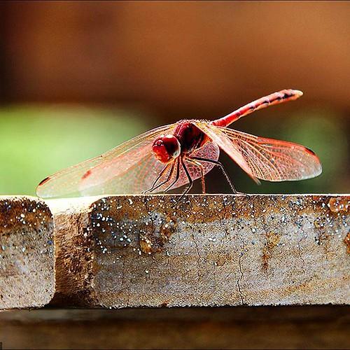 Оглянуться не успела... как лето продолжилось :) #summer #dragonfly #tourism #israel #golanheights