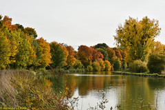 L't indien en Champagne ! (TICHAT10) Tags: champagneardenne france marne arbres automne canal eau