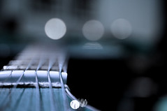 untitled (brescia, italy) (bloodybee) Tags: 365project acoustic guitar music instrument fender strings tuningpegs headstock stilllife bokeh blue