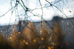 (PblCb) Tags: saintpetersburg nikon 50mm f14 nikkor d300s dof bokeh nature autumn