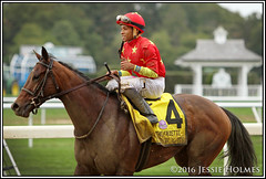 Yellow Agate (Spruceton Spook) Tags: yellowagate frizette belmontpark horseracing horses