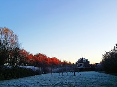 Snow Cold Temperature Winter Tree No People Outdoors Nature Sky Day Autumn Morning Netherlands Frost Frosty Mornings (markjowen66) Tags: snow coldtemperature winter tree nopeople outdoors nature sky day autumn morning netherlands frost frostymornings