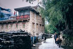 DSC_1126 (juor2) Tags: country road d4 nikon scene street streetsnap tibetan village cow elder sichuan chonglu