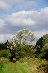 Silver on the sky (Lil Shepherd) Tags: landscape riverlea walthamabbey