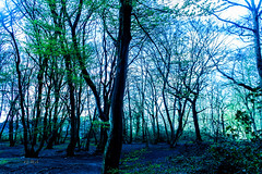 IMG_0056.jpg WM (MetallicNuance) Tags: nature ethereal country kent sky trees woodland