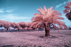 Purple Nature (Athrandel) Tags: infrared ir infra red sky skies landscape land landscapes park tree trees nature cloud clouds