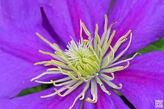Coeur de fleur (Alex..H) Tags: macro pistil petale fleur flower nature canon