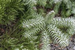 Erster Frost - 0035_Web (berni.radke) Tags: ersterfrost frost raureif wassertropfen rime eisblumen eiskristalle iceflowers icecrystals escarcha