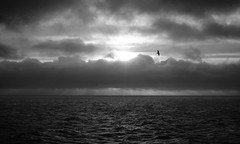 Flight ([ Jaso ]) Tags: bird sunset bw landscape seascape ocean blackandwhite sky sunrise rays light sea northsea scotland rx100