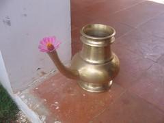 Art Of Living Bangalore Photography By CHINMAYA M.RAO Set-1 (141)
