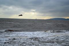 DSC_0585_097 (bebbony88) Tags: teignmouth stormyseas stormy windy winter wild