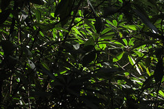 sunny leaves (Molly Des Jardin) Tags: park trees shadow usa sun green leaves forest state bright pennsylvania sunny 2014 susquehannock drumore 43215mm