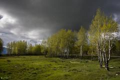 When it rains in Grand Teton 2 (Abhijit.......................) Tags: rain canon landscapes grandtetonnationalpark canonefs1855 canon450d