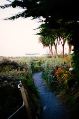Hidden Path (Alex Holyoake) Tags: ocean trip trees ireland sunset sky beach water ferry wales clouds evening coast sand waves ship horizon palm sail float wexford