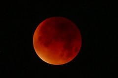 Lunar Eclipse (Travelling Postie) Tags: red moon night star eclipse planet lunar solarsystem bloodmoon eclipseinhereford