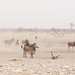 dusty, smoky day at the waterhole