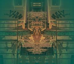 Tree at the old brick wall besides the new house - Building Site Baustelle Construction site Lichtgasse Gasgasse Zwölfergasse Leydoltgasse bahnhofsnähe Westbahnhof view blick Gleis 1 Bahnsteig 1 (archive_diary) Tags: vienna wien tree brick wall austria mirror abend design sketch österreich view spiegel diary dream sketchbook baustelle unterwegs ornament memory birch monochrom xv weaver requiem constructionsite nonsense buildingsite weave tagebuch baum blick bau weber neu mauer birke erinnerung 1150 rundgang abendstimmung neuer mariahilf traum analogie ziegel beobachtung entwurf westbahnhof bearbeitung skizze sewingpattern gleis1 weben skizzenbuch lieblingsfarbe schnittmuster gasgasse bahnhofsnähe leydoltgasse bahnsteig1 15bezirk zwölfergasse photographicsketch prokrustes musterbogen teppichweber photographischeskizze neuest lichtgasse einhausbauen