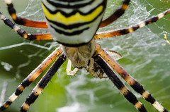 DSC_0401 (Unionscum) Tags: macro closeup insect spider